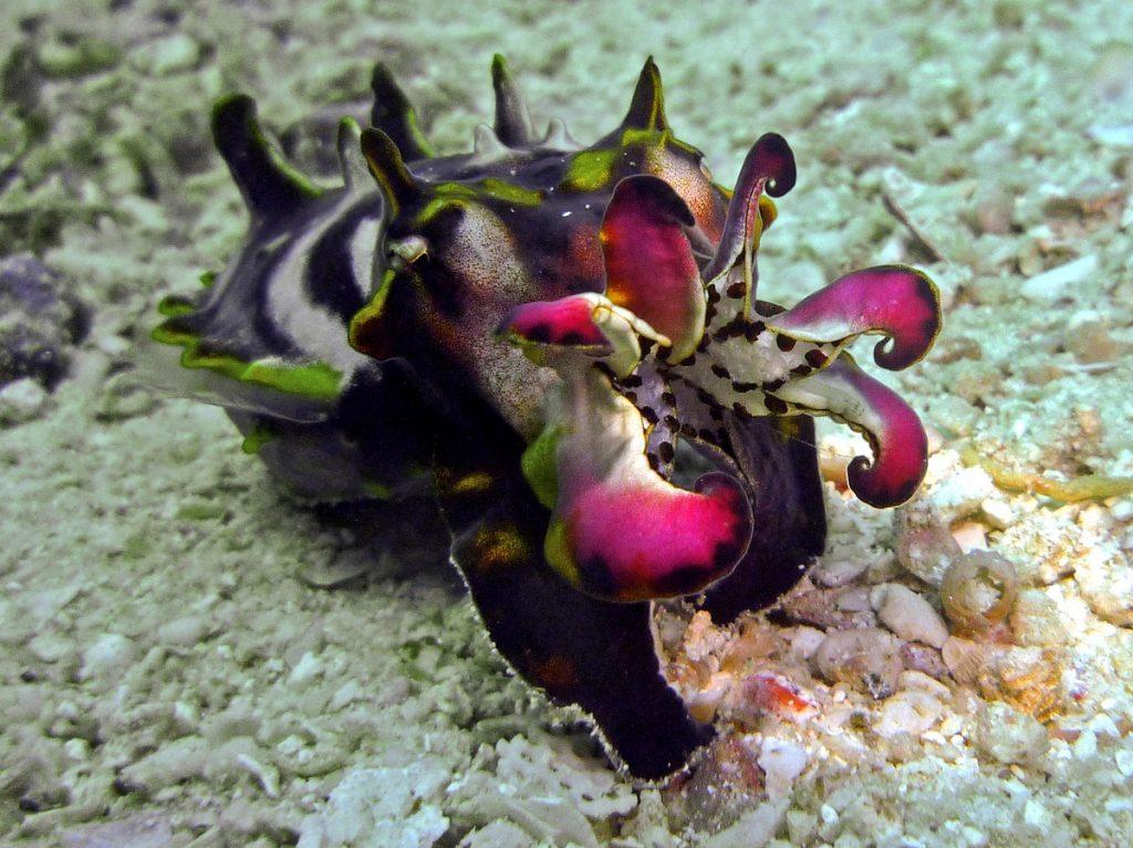 Blog-Bierzoo-Una-sepia-o-un-pequeño-hipopotamo-subacuatico
