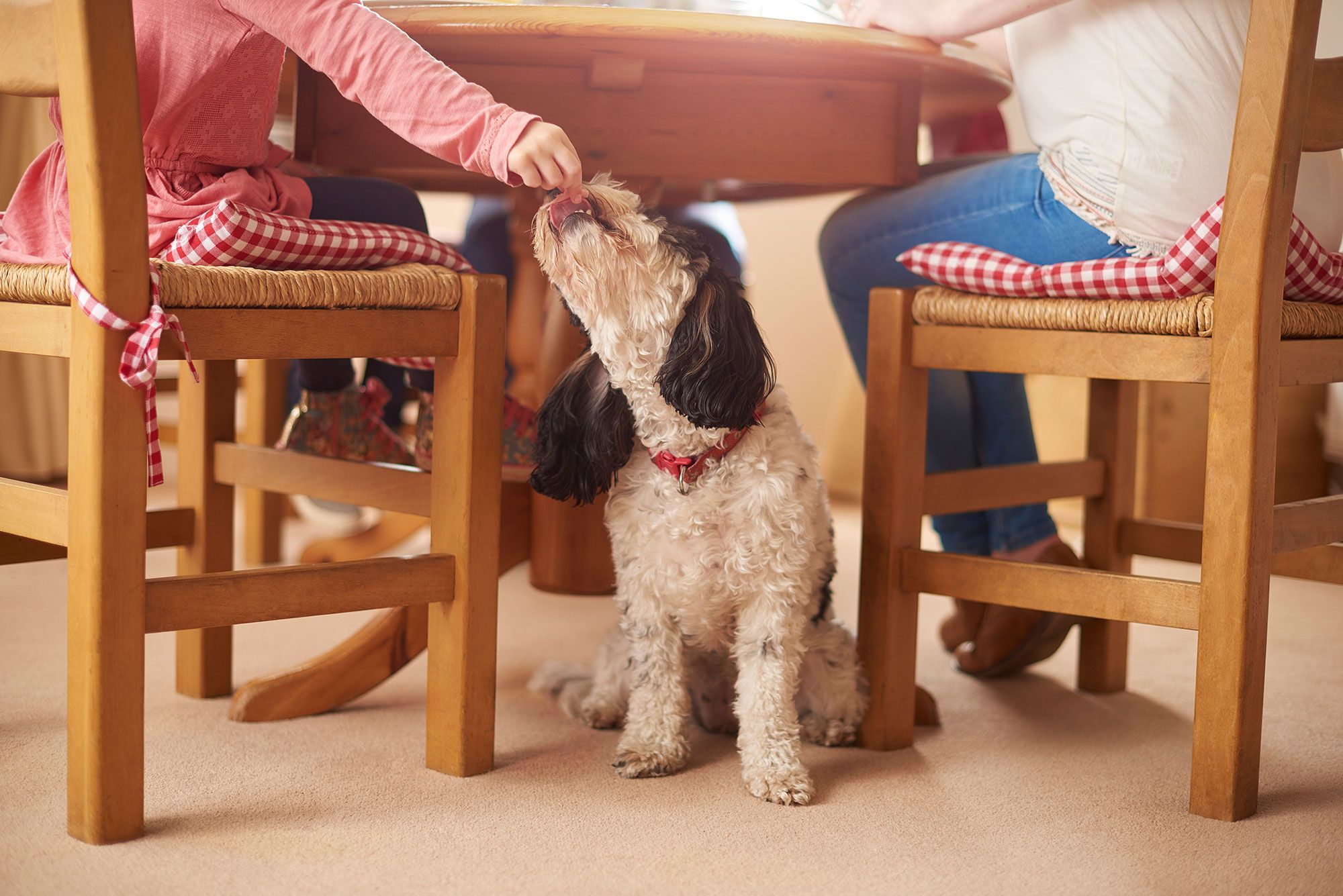 Blog-Bierzoo-Que-Puede-Comer-Mi-Mascota-En-Navidad