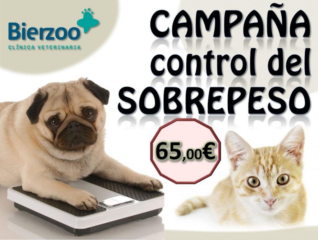 Blog-Bierzoo-Campaña-Control-Del-Sobrepeso-En-Perros-Gatos-Post