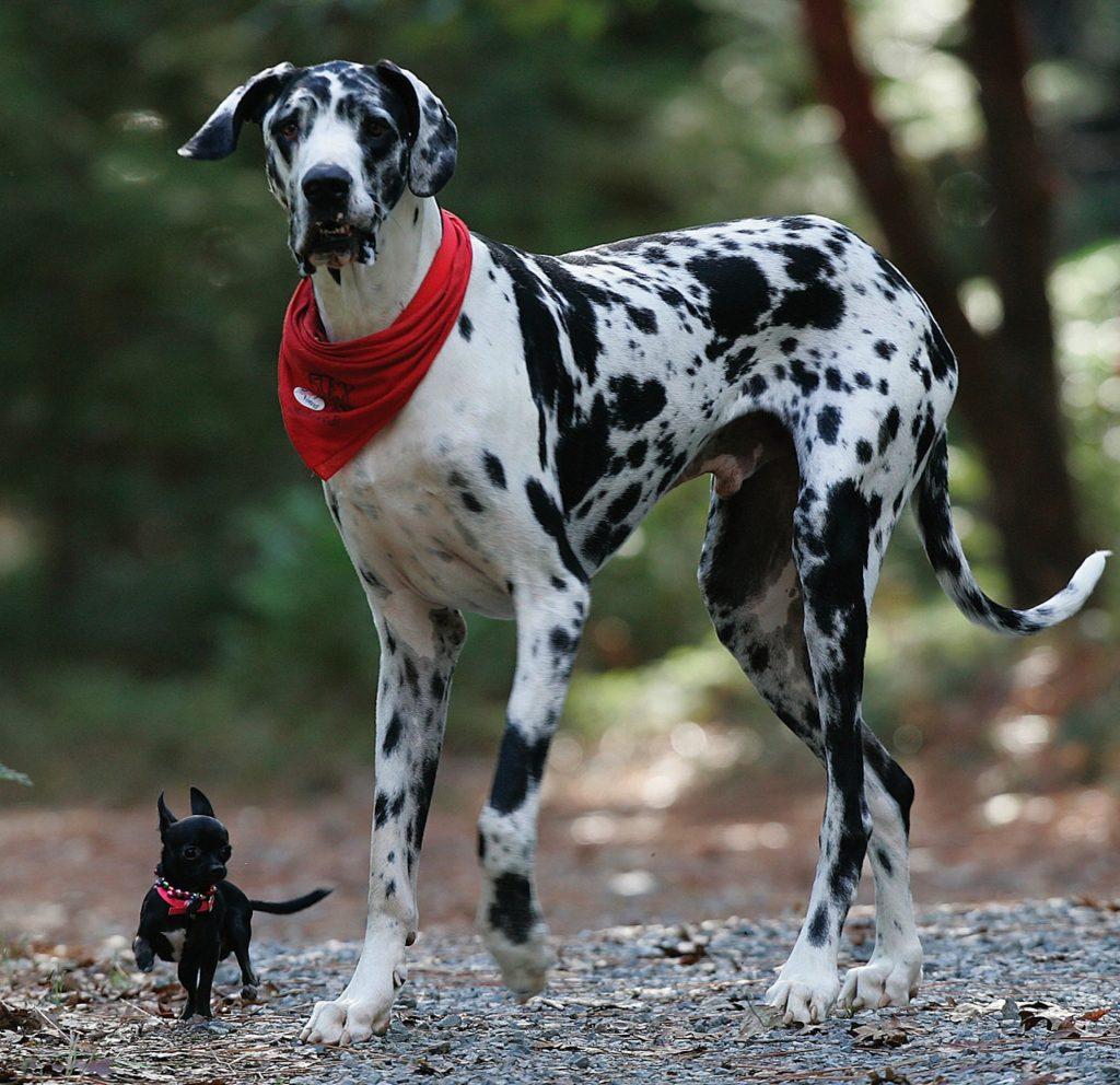 07 Ago ¿Cuáles son las necesidades de tu perro?